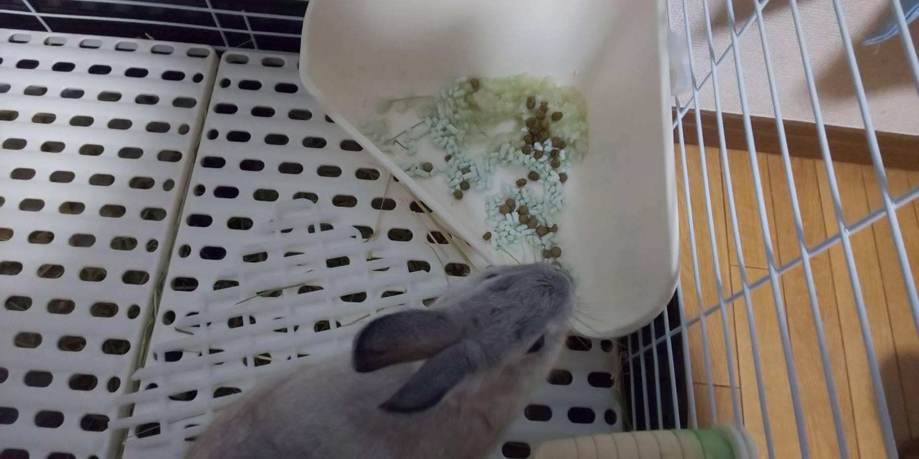 【ミニウサギ】うさぎのトイレで困ったことなんだけど。