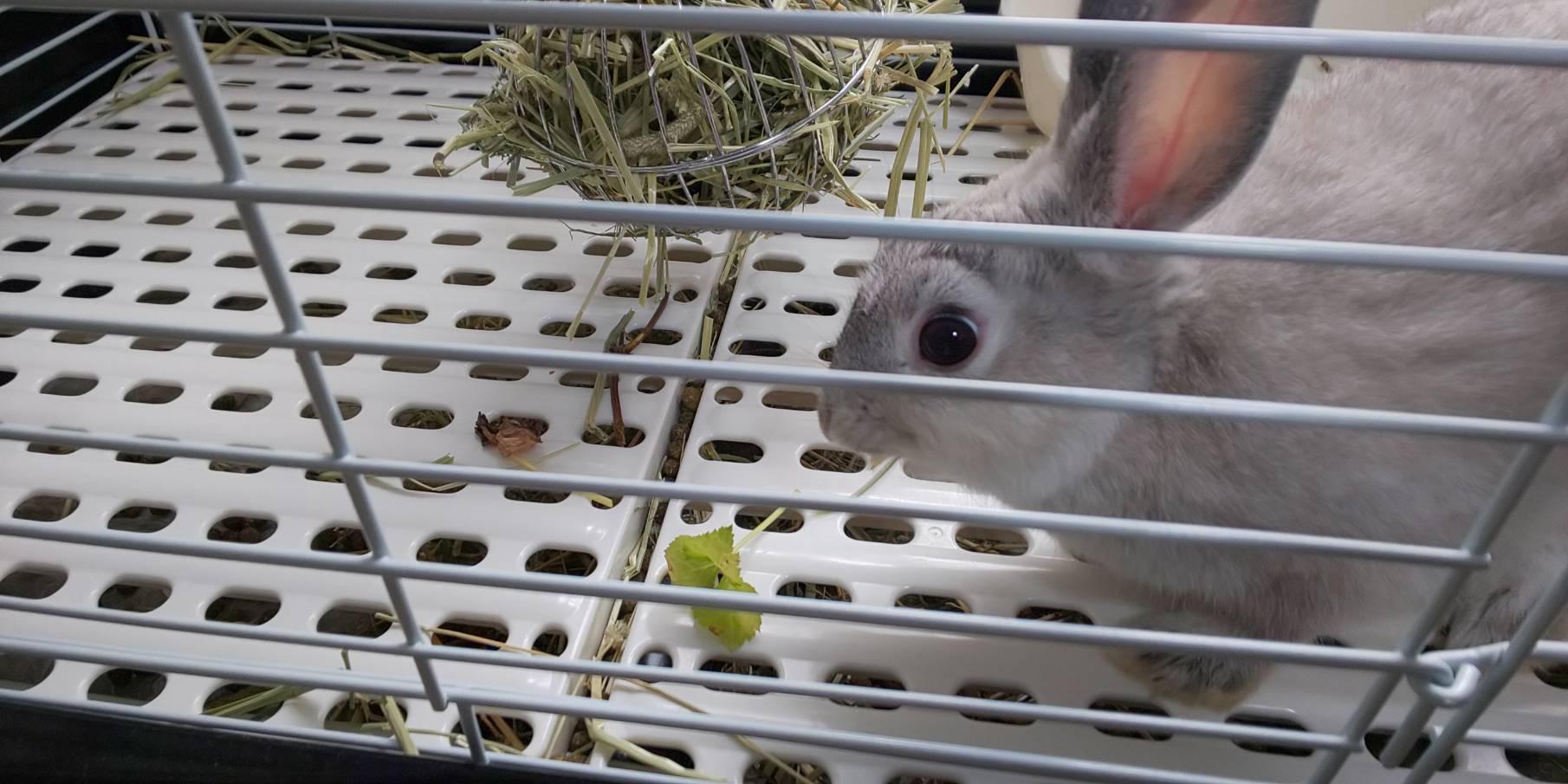 【ミニウサギ】三つ葉を食べたら、目を真ん丸にさせたんだけど。