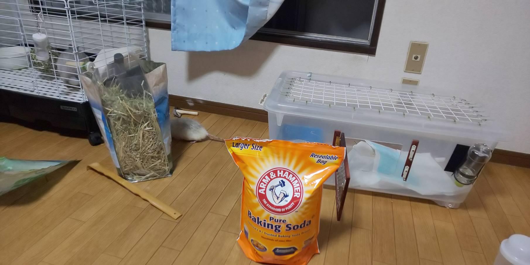 【ファンシーラット】ベーキングソーダでペットの臭い取り!