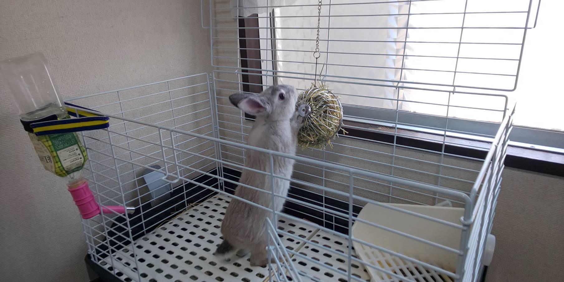 もしも俺のウサギがトリプルアクセルを決めたら。