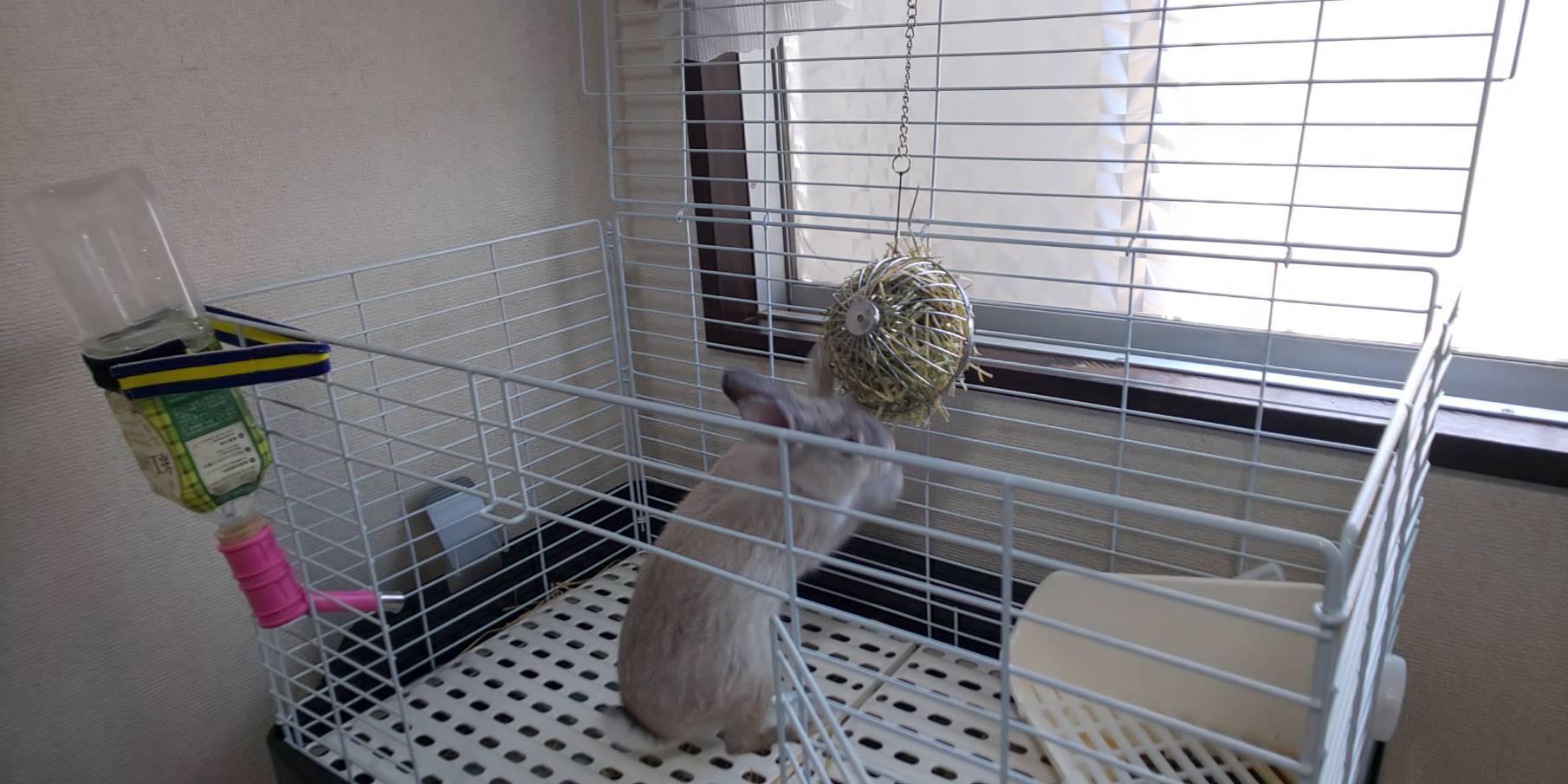 やはり俺のウサギは間違っている ③ ウサギのストレートパンチとかあるのかな?
