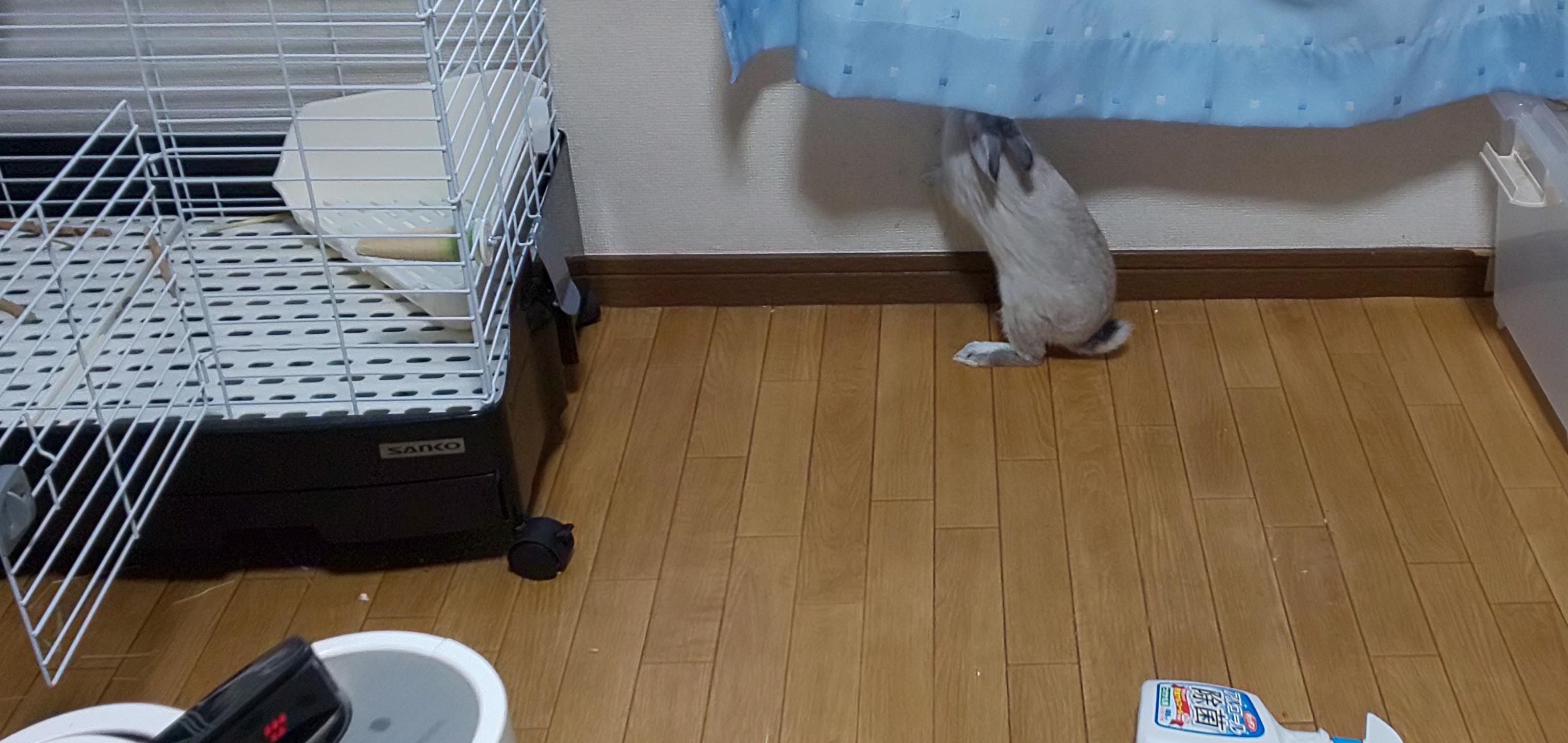 やはり俺のウサギは間違っている。③ ウサギも月を見たりするのか?