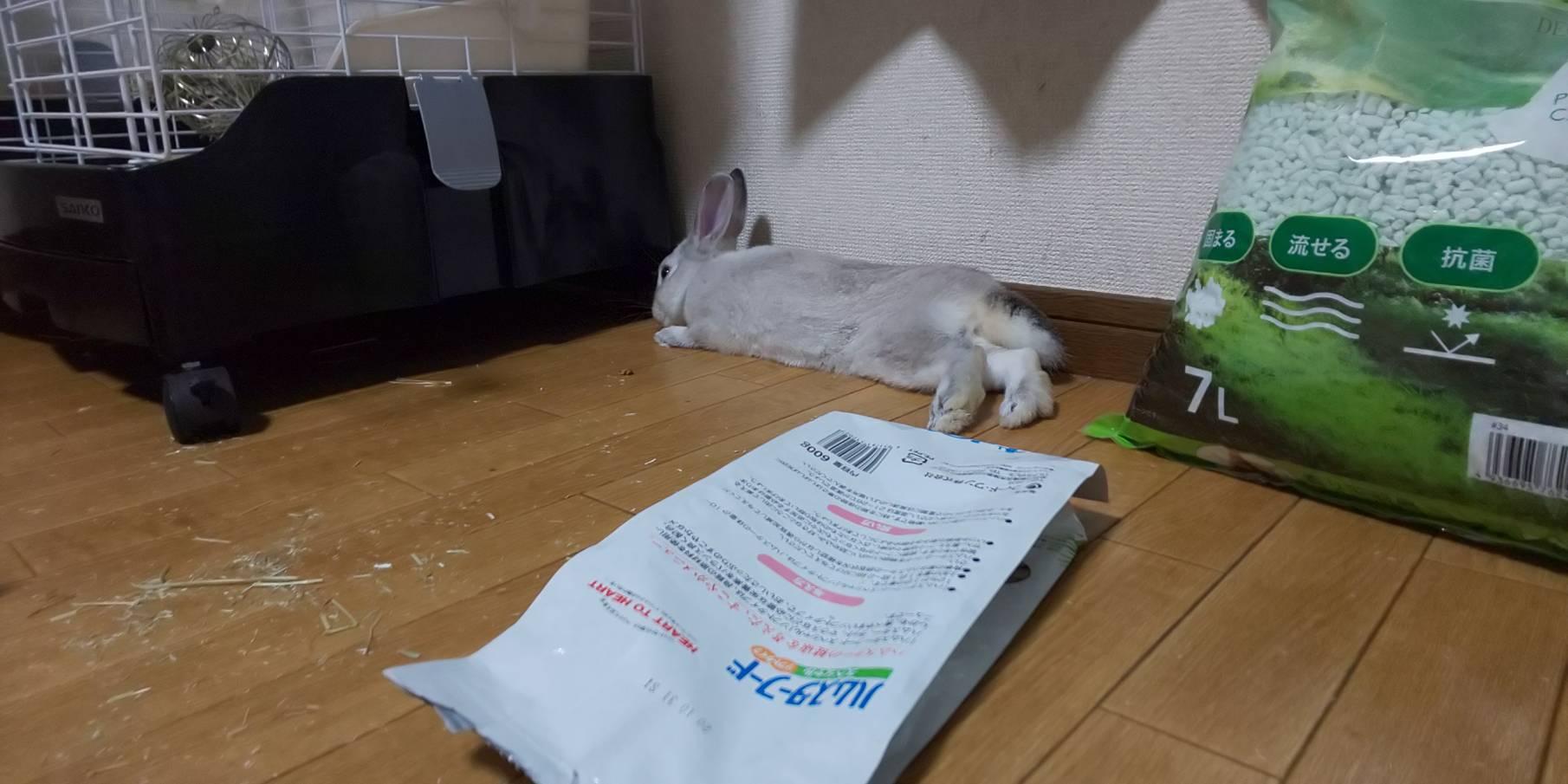 【ミニウサギ】寝る子は育つ!ウサッ