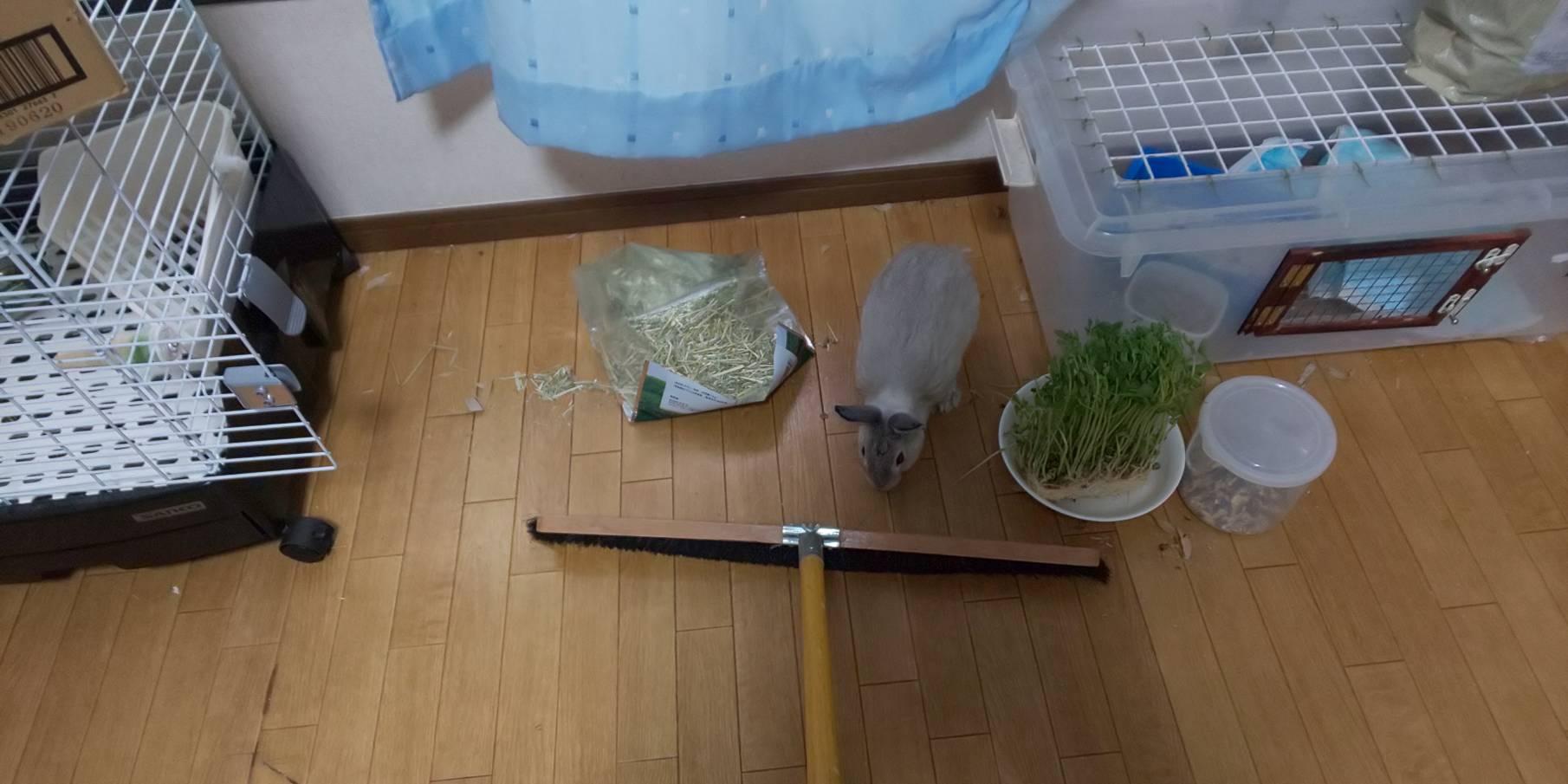 ウサギの掃除にはコレが一番かも。
