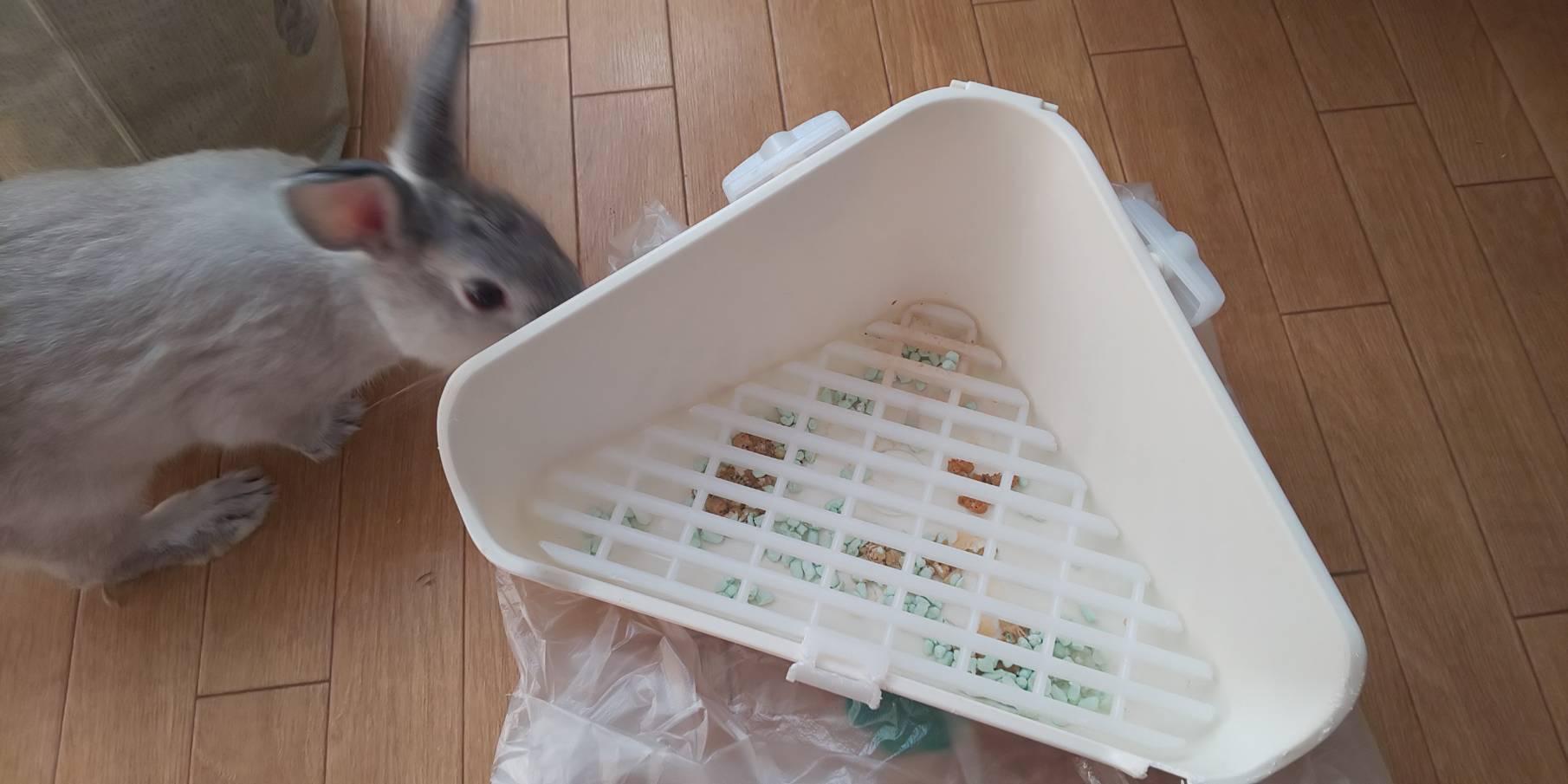 【ミニウサギ】 トイレ戦争に終止符!! もうトイレで悩みません。