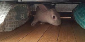 【ミニウサギ】 ウサギのケージがガタガタ音がしてうるさい・・・・どうしてる?