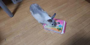 【ミニウサギ】 野菜のお菓子スティック上げてみたんだけど・・・ 中身より外箱好きってw