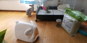 【ミニウサギ】ウサギの快適ベッドを買って見たんだけど・・・