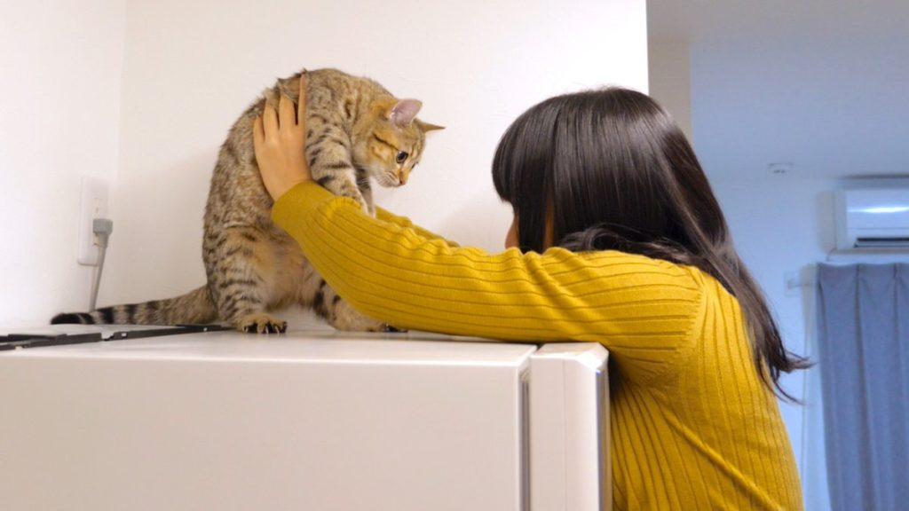 ワイニート、妹とネコしか話し相手がいない